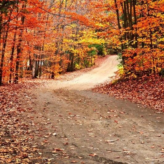 fall-473388-edited